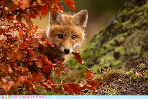 Fox in Fall